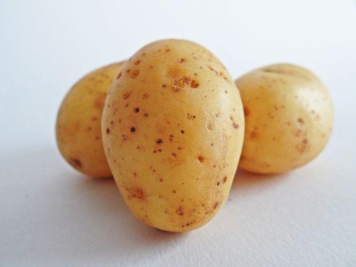 bulvės,daržovės,laukas,valgyti,bio,gamta,Žemdirbystė,angliavandeniai