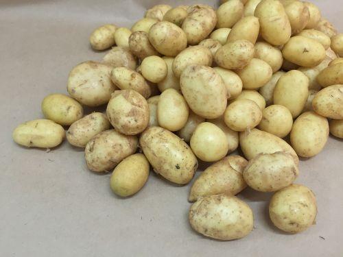 potatoes young potato