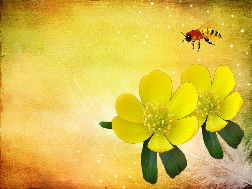 potentilla kobold flower