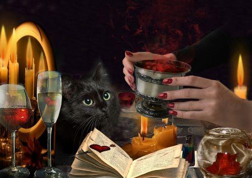 potion hands cat fingers