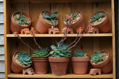 puodai,sodas,kaktusai