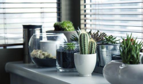 puodai,augalai,kaktusas,sultingas,lentyna,langas,sodas,gamta,sodininkystė,puodai,balta,dizainas,namai,interjeras,kambarys,dekoruoti,gyvenimas,gyvenimo būdas,stiklas
