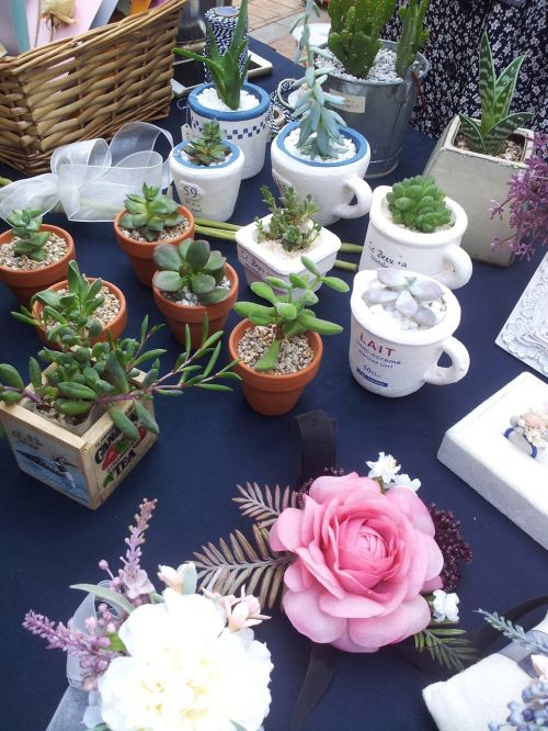 potted plant flowers mini