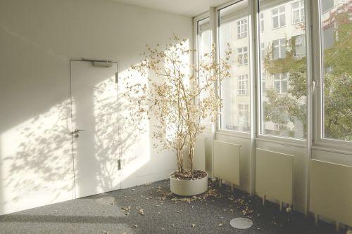 pasodintas augalas,sausas,nudrus,paliktas,pamiršta,saulės šviesa,langas,šviesus,interjeras,tuščia,lapai,kritęs,augalas,kambarinis augalas