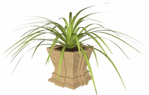 žalias, puodą, puodai, augalas, izoliuotas, balta, fonas, pasodintas augalas