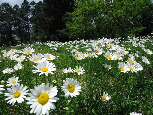 prado flowery margaritas