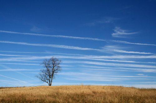 prairie meadow midwest