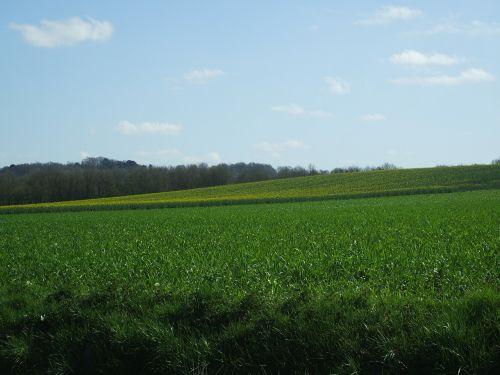 prairie spring the fields