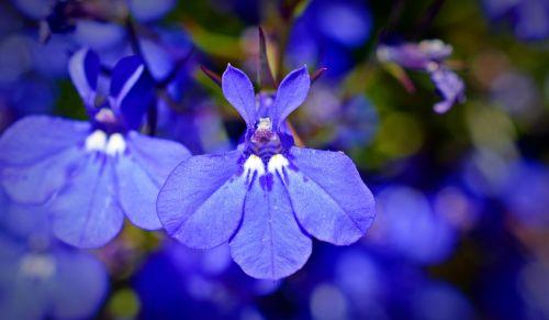 praise lien bell flower greenhouse flower