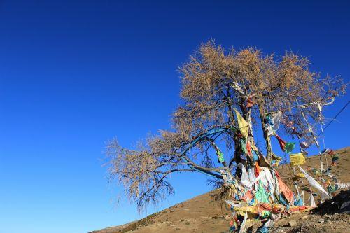 prayer flags tree in tibetan areas