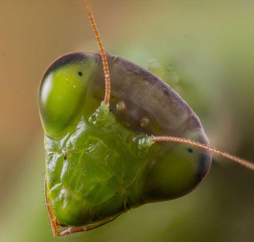 praying mantis insect animal