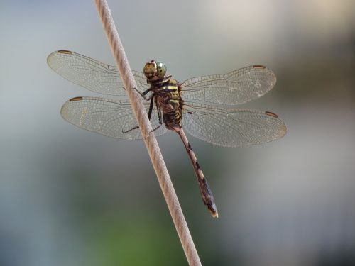 dragonfly special shooting