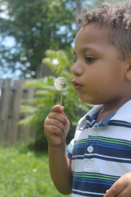 pre-schooler boy dandelion seeds