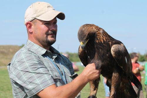 predator bird eagle