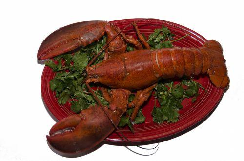 Prepared Lobster On White