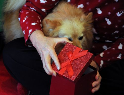 Present For The Dog