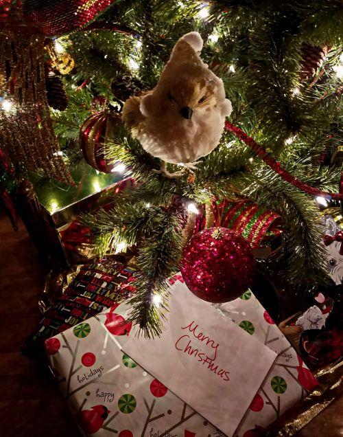 Present Under The Christmas Tree