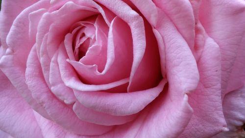 pretty beautiful pink