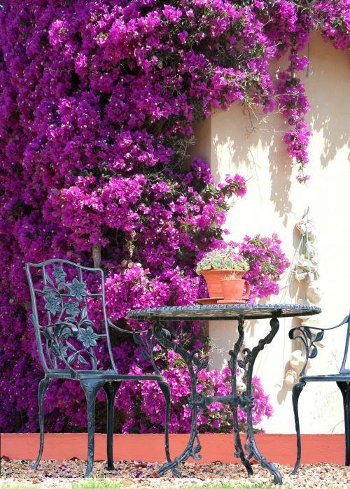 Pretty Garden Purple Flowers