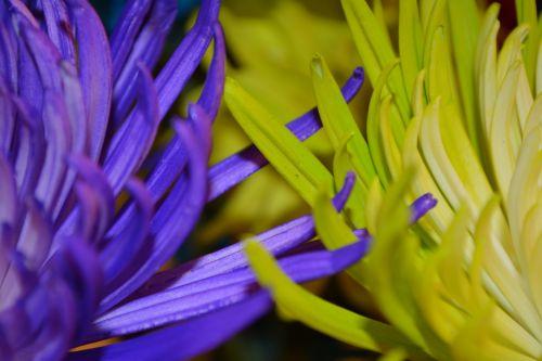 Free photos purple yellow flowers petals vine search download flowerplantnaturevineyellowpurpleloveromance mightylinksfo