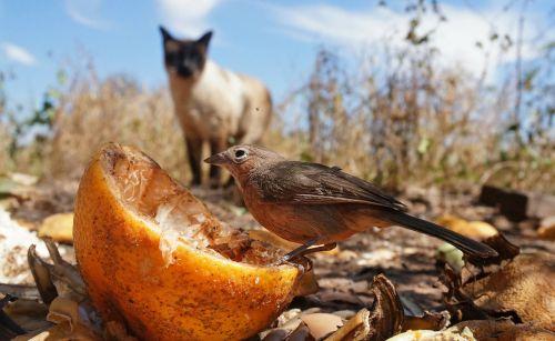 prey hunt bird