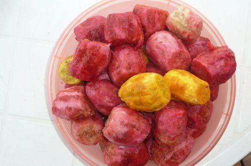 prickly pears salento puglia