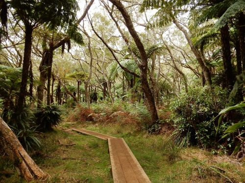 primary forest hiking reunion island