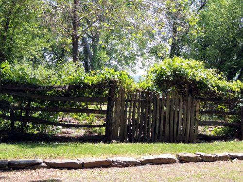 Primitive Garden