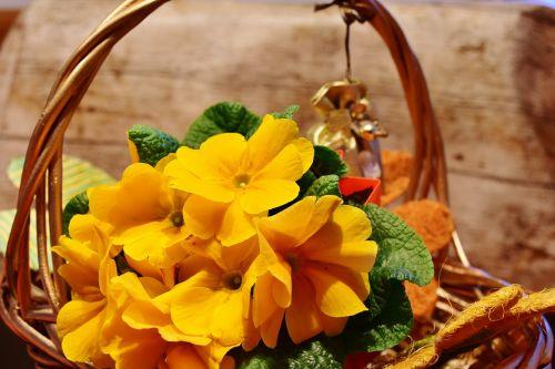 flower primrose signs of spring