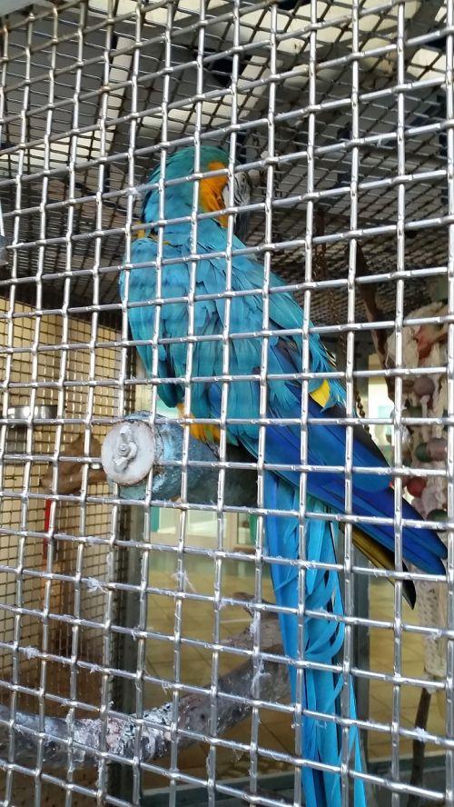 prison bird cage