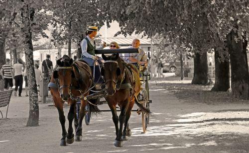 promenade horses trees