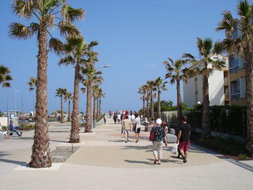 promenade palm walk