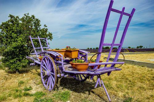 provence valensole lavender