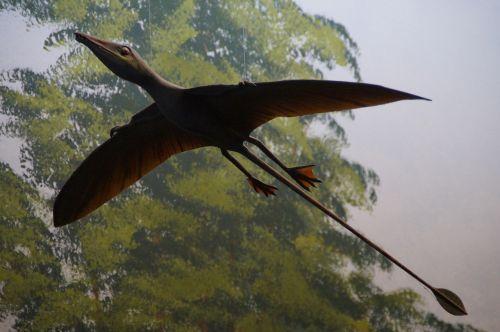 pterosaur replica exhibit