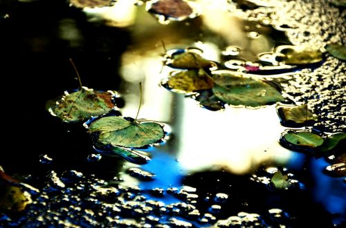 puddle light leaves
