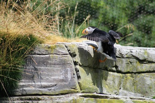 puffin  zoo  water