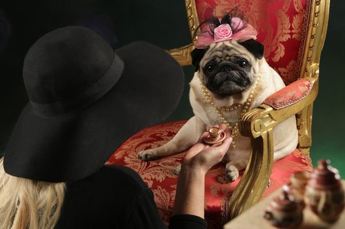 pug  coffee  tea party