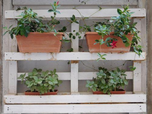 puglia plant green
