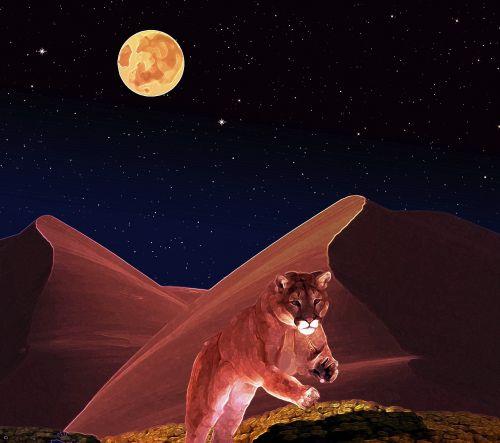 puma predator wildcat