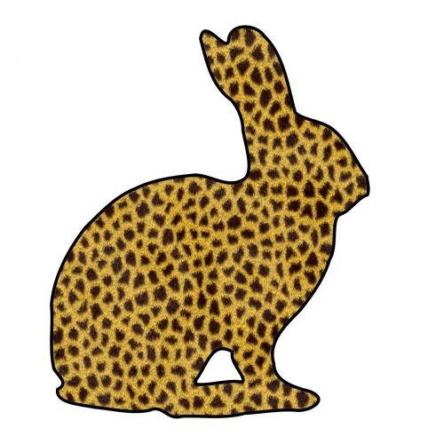 Puma Bunny