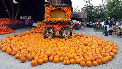 pumpkin thanksgiving harvest