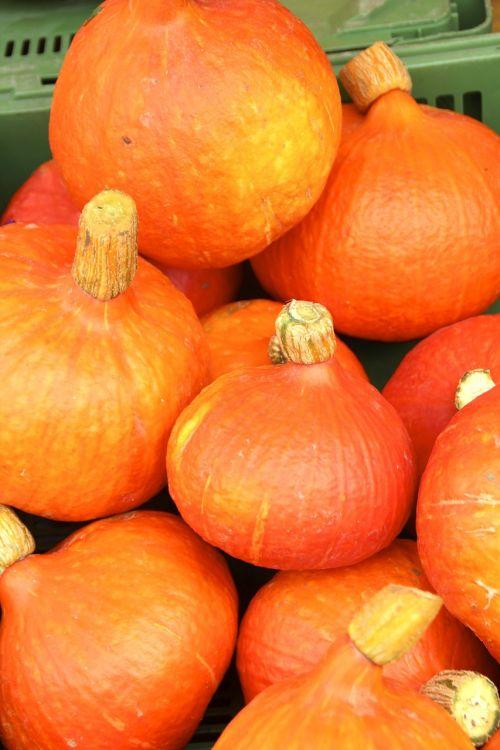 pumpkin autumn helloween