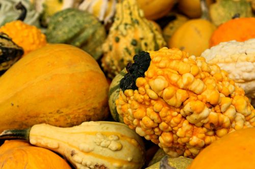 pumpkin autumn nature