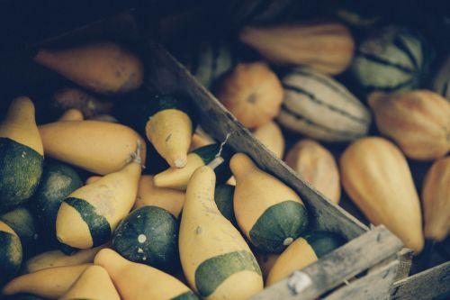 pumpkin gourd autumn