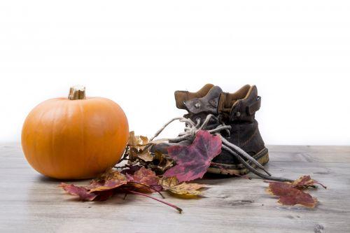 moliūgas, Halloween, apdaila, prinokę, visa & nbsp, moliūgo, moliūgas & nbsp, uždaryti & nbsp, aukštyn, ruduo, sezoninis, oranžinė, moliūgas & nbsp, baltas & nbsp, fonas, moliūgas & nbsp, Halloween, vienas, daržovių, moliūgas & nbsp, pleistras, moliūgai & nbsp, izoliuoti, gydyti, triukas, dekoratyvinis, vienas & nbsp, moliūgas, šviežias, moliūgas