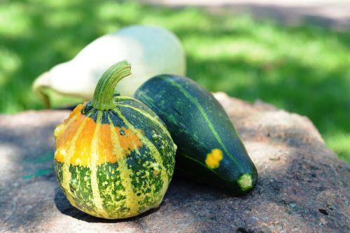 pumpkin pumpkins ornamental pumpkins