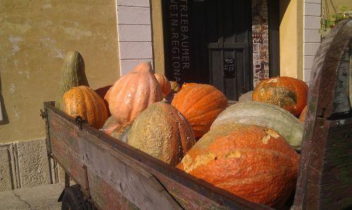 pumpkin dare autumn
