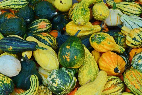 pumpkin harvest time sale