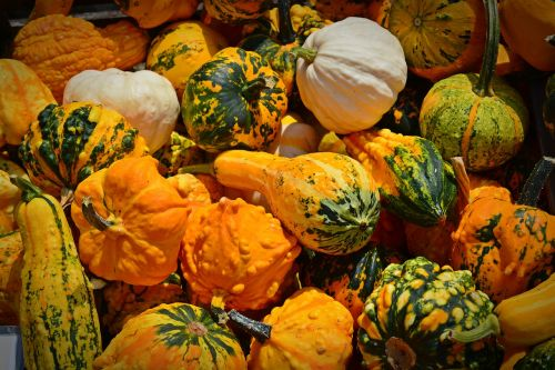 pumpkin harvest time sale