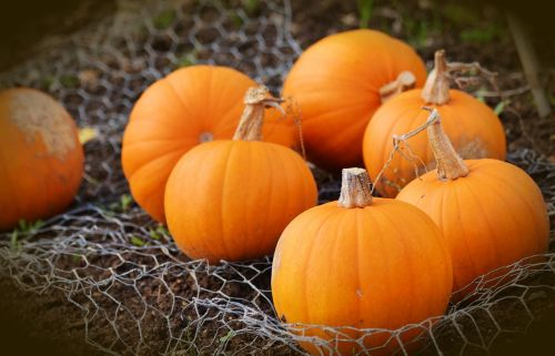 pumpkin squash autumn